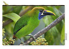 Emerald Toucanet Carry-all Pouch by Tony Beck