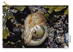 Carry-all Pouch featuring the photograph Emerging Hermit by Adria Trail