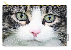Carry-all Pouch featuring the painting Expressive Maine Coon D122016 by Mas Art Studio