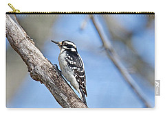 Carry-all Pouch featuring the photograph Female Downey Woodpecker 1104  by Michael Peychich