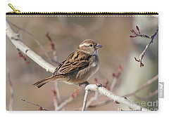 Female House Sparrow Carry-all Pouch