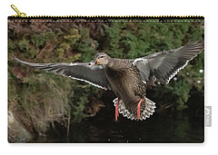 Female Mallard Carry-all Pouch by Keith Boone