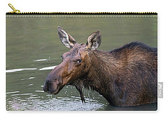 Carry-all Pouch featuring the photograph Female Moose Head by James BO Insogna