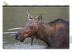 Carry-all Pouch featuring the photograph Female Moose Head Shot by James BO Insogna