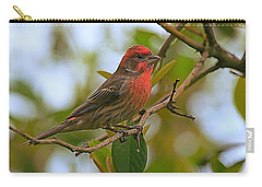 Finch Portraiture Carry-all Pouch by Steve Warnstaff
