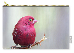 Fire Finch Carry-all Pouch