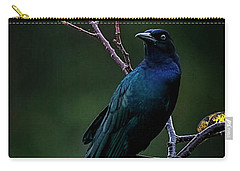 Male Boat-tailed Grackle Carry-all Pouch by Cyndy Doty