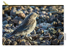 Fledgling Mountain Bluebird Carry-all Pouch