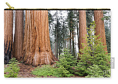 Carry-all Pouch featuring the photograph Forest Growth by Peggy Hughes