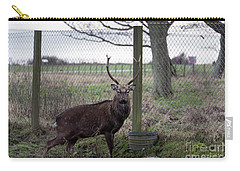 Formosan Sika Stag Carry-all Pouch by David  Hollingworth