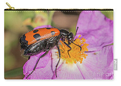 Carry-all Pouch featuring the photograph Four-spotted Blister Beetle - Mylabris Quadripunctata by Jivko Nakev