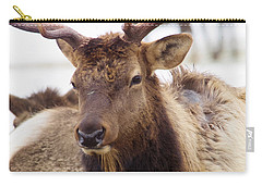 Carry-all Pouch featuring the photograph Gaze From A Bull Elk by Jeff Swan