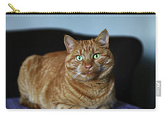 Carry-all Pouch featuring the photograph Ginger Marmalade Cat by Nareeta Martin
