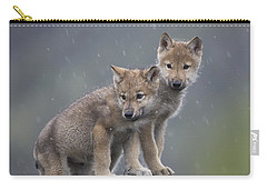 Gray Wolf Canis Lupus Pups In Light Carry-all Pouch