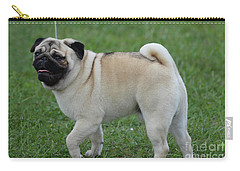Great Looking Pug Dog On A Leash Carry-all Pouch