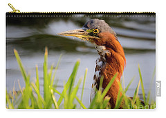 Green Heron Closeup  Carry-all Pouch
