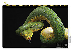 Green Tree Python. Morelia Viridis. Isolated Black Background Carry-all Pouch by Sergey Taran