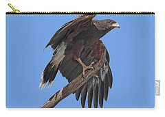 Harris Hawk - Transparent Carry-all Pouch