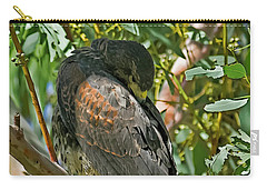 Carry-all Pouch featuring the photograph Harris's Preening V09 by Mark Myhaver