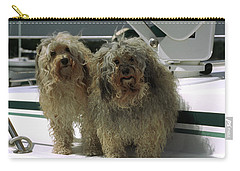 Carry-all Pouch featuring the photograph Havanese Dogs by Sally Weigand