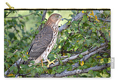 Carry-all Pouch featuring the photograph Hawk  by AJ Schibig