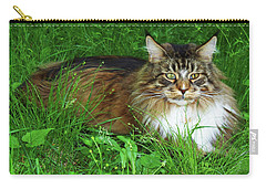 Carry-all Pouch featuring the photograph Hercules Maine Coon Elegance by Roger Bester
