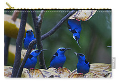 Honeycreeper Carry-all Pouch by Betsy Knapp