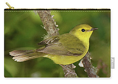 Hooded Warbler Female Carry-all Pouch by Alan Lenk