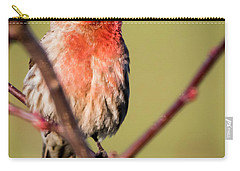 House Finch In Full Color Carry-all Pouch by Ricky L Jones