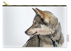 Carry-all Pouch featuring the photograph Husky Dog by Delphimages Photo Creations