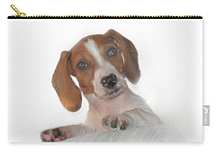 Carry-all Pouch featuring the photograph Inquisitive Dachshund by David and Carol Kelly
