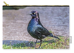 Carry-all Pouch featuring the photograph Iridescent Brewer by Kate Brown