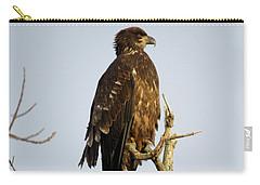Juvenile Bald Eagle 1 Carry-all Pouch