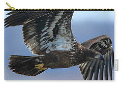 Carry-all Pouch featuring the photograph Juvenile Bald Eagle by Coby Cooper