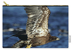 Carry-all Pouch featuring the photograph Juvenile Bald Eagle Over Water by Coby Cooper