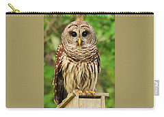 Juvenile Barred Owl Carry-all Pouch