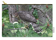 Juvenile Cooper's Hawk Carry-all Pouch by Doris Potter