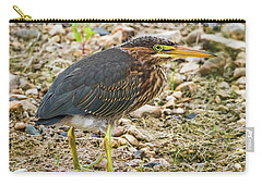 Carry-all Pouch featuring the photograph Juvenile Green Heron by Ricky L Jones