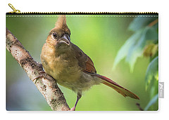 Juvenile Northern Cardinal Carry-all Pouch