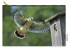 Kestrel Fledgling Visits Nest Carry-all Pouch by Alan Lenk