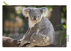 Koala In Tree Carry-all Pouch by Jamie Pham