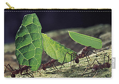 Leafcutter Ant Atta Cephalotes Workers Carry-all Pouch by Mark Moffett