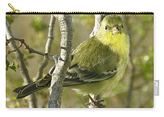 Lesser Goldfinch 1 Carry-all Pouch