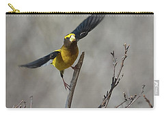 Liftoff-male Evening Grosbeak Carry-all Pouch