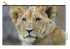 Lion Cub Close Up Carry-all Pouch by Steve McKinzie