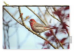 Little Finch Carry-all Pouch