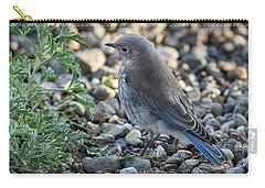 Little Fledgling Mountain Bluebird Carry-all Pouch