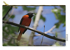 Male Baltimore Oriole Carry-all Pouch