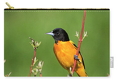Carry-all Pouch featuring the photograph Male Baltimore Oriole Posing by Ricky L Jones