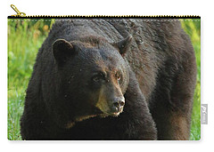 Male Black Bear In Late Light Carry-all Pouch by Coby Cooper